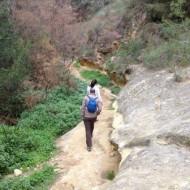 """Excursión Área Natural """"Pinar de Campoverde"""" en Pilar de la Horadada"""